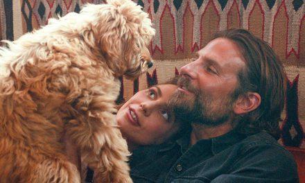 """El perro de Bradley Cooper lo hizo ganarse un """"Oscat"""""""