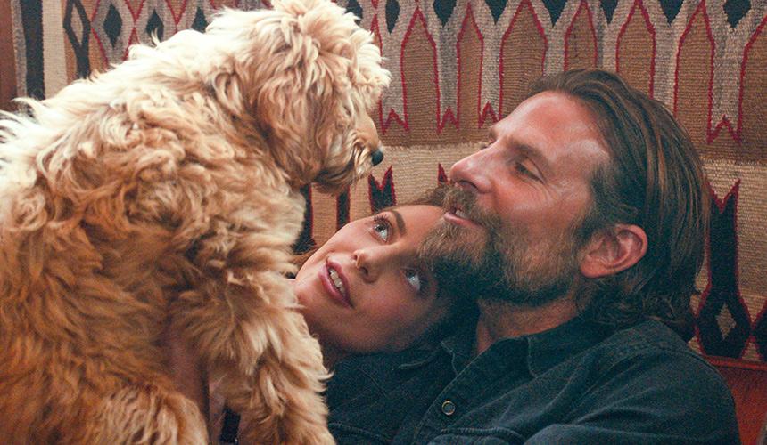 El perro de Bradley Cooper lo hizo ganarse un «Oscat»